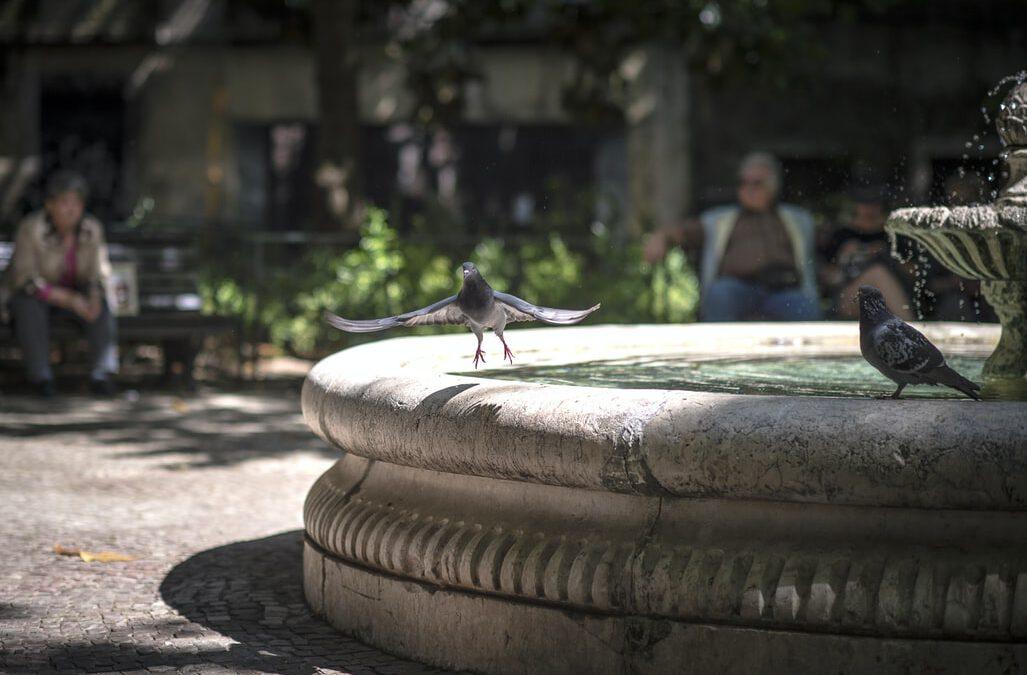 'Alle duiven op de dam' – Yvonne de Pan